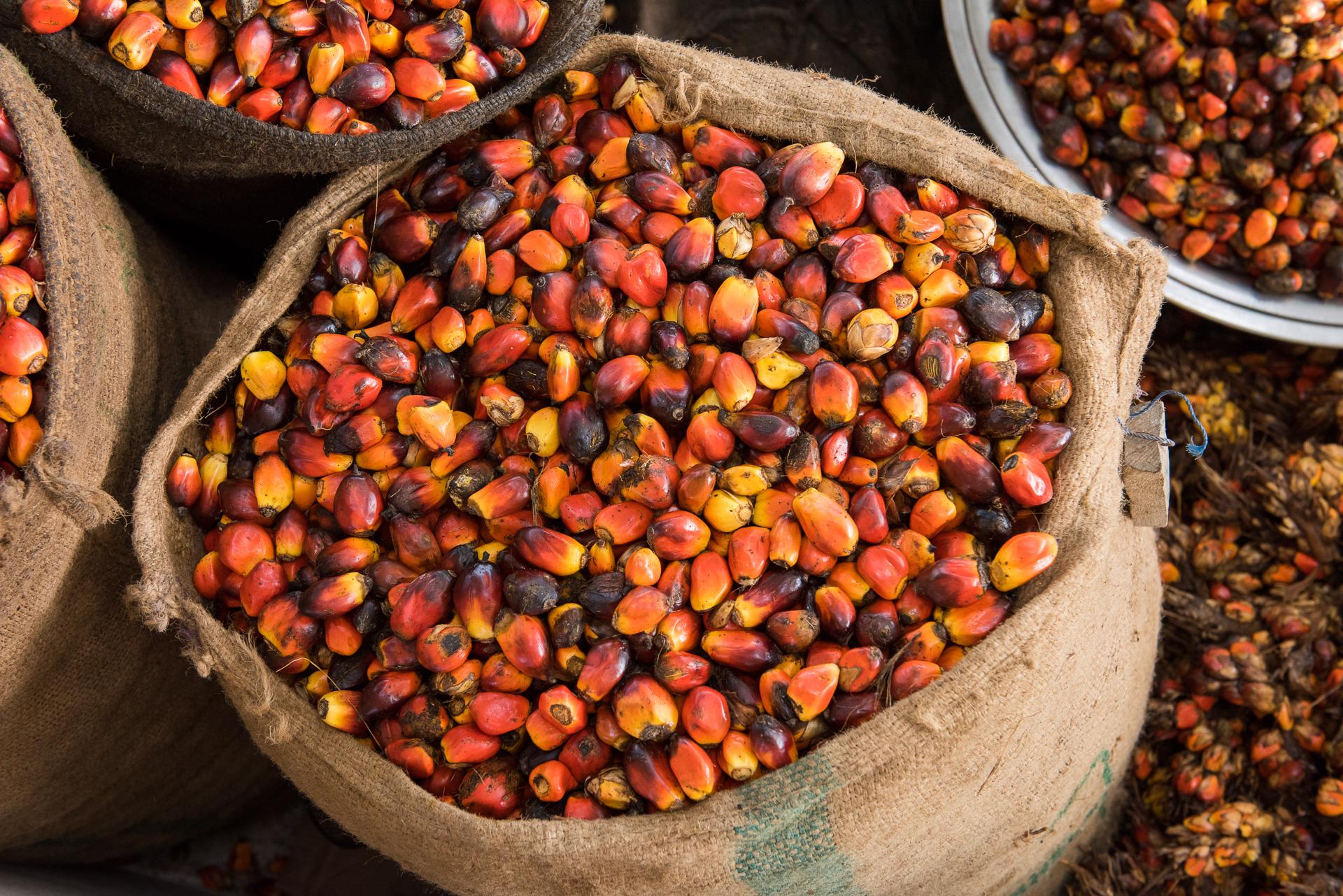 Serendipalm Fair Trade Bio Palmöl